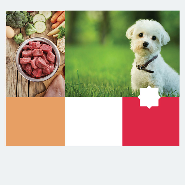 Free design template download for printing - 11x8.5 Brochure Pet Supply